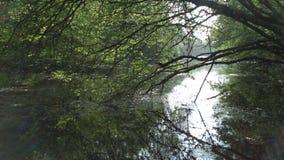 Древесины Chieveley Стоковые Фотографии RF