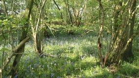 Древесины Chieveley Стоковые Изображения