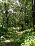 древесины hiking тропки стоковое изображение rf
