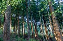 Древесины Idless приближают к truro Корнуоллу Англии Великобритании Стоковая Фотография