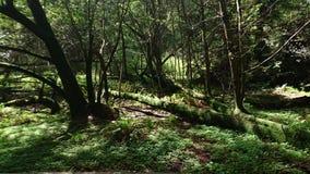Древесины Muir Стоковые Изображения