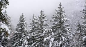 Древесины Snowy в зиме Стоковое Изображение RF