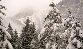 Древесины Snowy в зиме Стоковое Фото