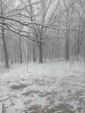 Древесины Snowy Стоковое фото RF
