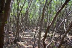 Древесины Srilankan Стоковое Изображение RF