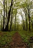 Древесная зелень Стоковые Фотографии RF