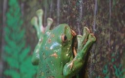 Древесная лягушка в крупном плане дерева стоковые изображения
