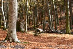 Древесное представление упаденное в парк осени Стоковое фото RF