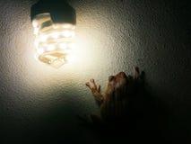 Древесные лягушки сидят в тенях на бетонных стенах стоковое изображение rf
