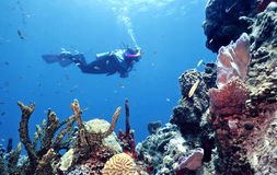 древний риф Стоковые Фото