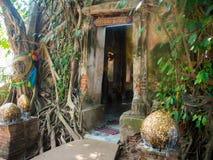 Древний храм заволакивания корня дерева: Челка Kung Wat на Amphawa Стоковое Изображение