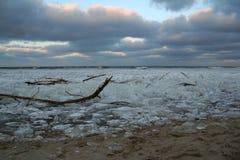 Дрейфующий лед на пляже стоковые фотографии rf