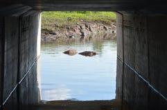 Другая сторона тоннеля Стоковое Изображение RF