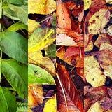 Другие цвета листьев стоковое фото
