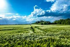 Другое зеленое поле стоковое фото rf