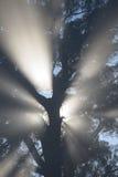 Другое туманное утро Стоковые Изображения RF