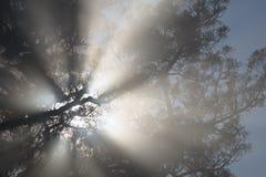 Другое туманное утро Стоковое Фото