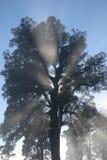 Другое туманное утро Стоковая Фотография RF
