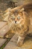 Другой портрет бездомного кота улицы Стоковая Фотография