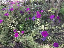 Другой фиолетовый всход Стоковые Фотографии RF