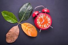 Другой цвет и время листьев дерева джекфрута выходят f Стоковое Фото