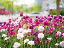 Другой цвет цветковых растений Стоковое Изображение RF