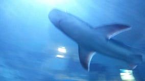 Другой pic акулы Стоковые Изображения RF