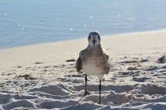 Друг птицы Стоковое фото RF