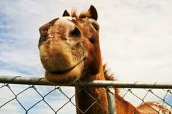Дружелюбная усмехаясь лошадь стоковое фото
