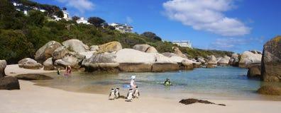 Дружелюбные пингвины Стоковое Изображение RF