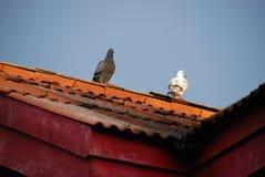 Дружелюбные птицы на крыше Стоковая Фотография RF
