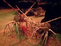 Дружелюбные crustaceans стоковые изображения
