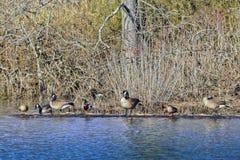 Друзья водоплавающей птицы Стоковые Изображения RF