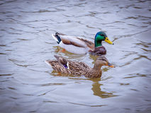 Друзья воды Стоковые Фото