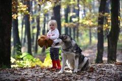 Друзья девушка и собака играют в ребенке друзей леса осени и осиплой игре на свежем воздухе в древесинах внешних Стоковая Фотография