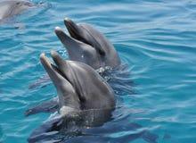 друзья дельфинов мои Стоковое фото RF