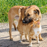 Друзья - коричневый кот собаки и имбиря совместно Стоковое Изображение RF