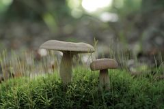 Друзья леса Стоковое фото RF