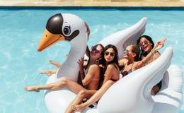 Друзья наслаждаясь на раздувном лебеде в бассейне Стоковые Изображения RF