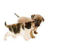 Друзья щенка и котенка. Стоковые Изображения