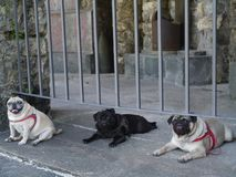 3 друз совместно: Cleo, Blacky и Spiderr, отдыхая после длинной прогулки Стоковое фото RF