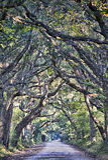 Дубы болота грязной улицы плантации залива ботаники пугающие прокладывают тоннель wi Стоковая Фотография