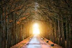 Дубы дерева прокладывают тоннель вокруг темноты, и света в конце весны тоннеля и дороги Стоковые Изображения RF