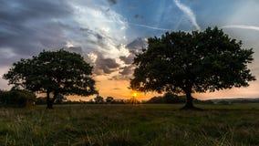 Дубы на восходе солнца стоковое фото rf
