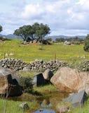Дубы на зеленом луге с загородками камней и пасмурной предпосылкой голубого неба Стоковые Изображения RF