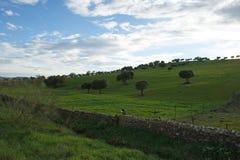 Дубы на зеленом луге с загородками камней и пасмурной предпосылкой голубого неба Стоковое фото RF