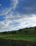 Дубы на зеленом луге с загородками камней и пасмурной предпосылкой голубого неба Стоковая Фотография