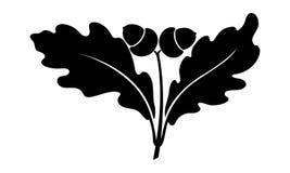 Дуб ветви с жолудями иллюстрация штока