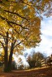 Дуб-выровнянный переулок в осени Стоковое фото RF