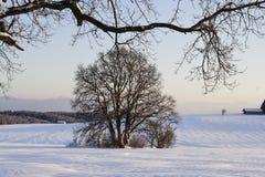Дуб в зиме в снеге, Баварии, Германии стоковая фотография